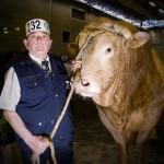 klesnil-fotografie-kravy