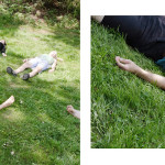 Trochu jógy a psí masáže pomůže k lepším fotografickým výkonům :)