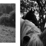 Z víkendových workshopů v přirozeném prostředí domova portrétovaných.